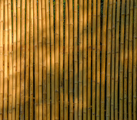 Bamboo fence use as background