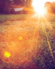 Weidelandschap bij zonsondergang