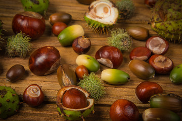 Autumn chestnut and acorn on table