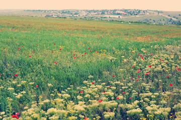 Beautiful wild flowers in field