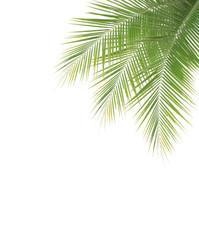 Green coconut leaf frame on white background