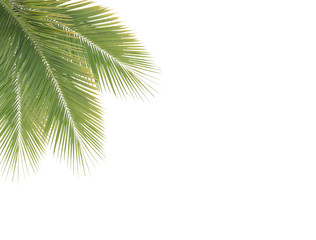 Green coconut leaf frame