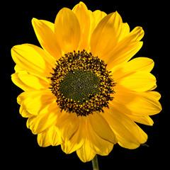 Yellow Awakening