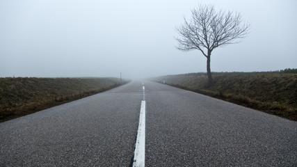 Straße/ Nebel/ Verkehr - Baum