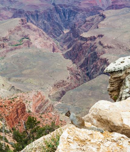 Wall mural Grand Canyon Squirrel