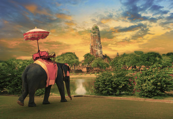 elephant with thai kingdom tradition accessories in Ayuthaya