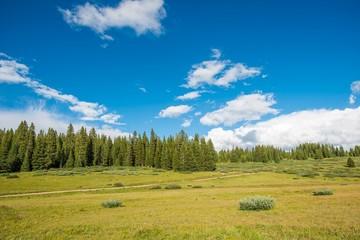 Wall Mural - Colorado Summer Meadow