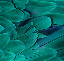 Macaw Feathers (Teal)