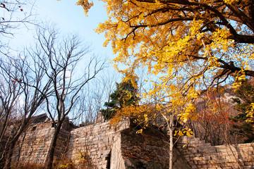 Laoshan mountain's beautiful autumn scenery of China