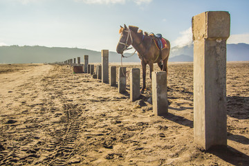 Wall Mural - A Horse at Mount Bromo in east Java, Indonesia