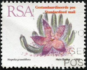 stamp shows a flower Stapelia grandiflora
