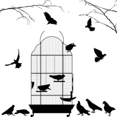 Wall Murals Birds in cages Open bird cage and birds
