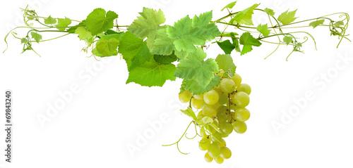 grappe de raisin blanc et feuilles de vigne photo libre de droits sur la banque d 39 images. Black Bedroom Furniture Sets. Home Design Ideas