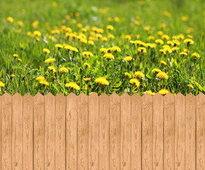 Wooden fence  and meadow with dandelions