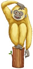 A yellow chimpanzee
