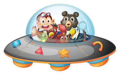 Playful animals inside the saucer