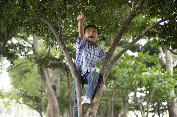 young boy on the tree