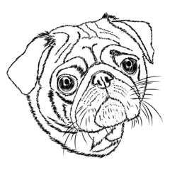 pug vector linear illustration on a white background
