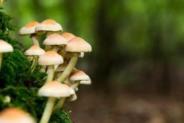 wild forrest mushroom
