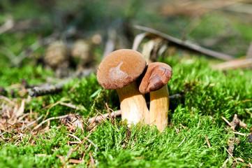Pilze suchen und finden