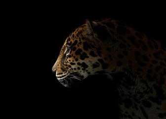 Deurstickers Panter jaguar ( Panthera onca ) in the dark