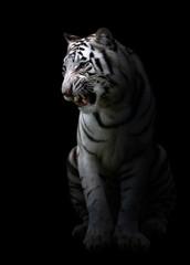 Deurstickers Panter white bengal tigerin the dark