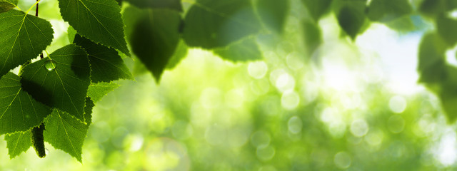 Summer foliage after the rain, abstract environmental background
