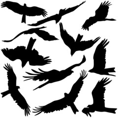 Set black silhouettes of prey eagles on white background.