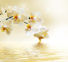 Obraz Beautiful white orchid - fototapety do salonu
