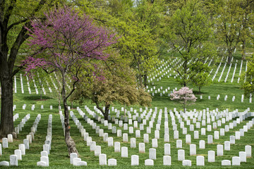 Printed roller blinds Cemetery arlington cemetery graveyard