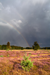 rainbow after shower over meadow with heather