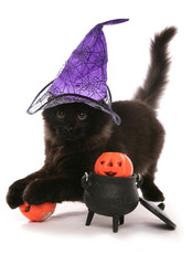 Halloween black siberian kitten cat