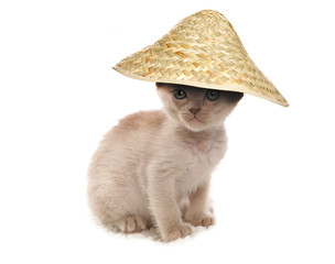 cream burmese kitten wearing chinese hat cutout