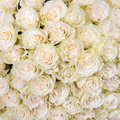 Abstract background of white roses