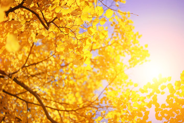 Sticker - Yellow autumn leaves over sunny sky background