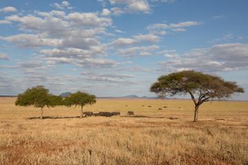Elefantengruppe mit Akazie in der Savanne