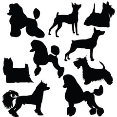 Set of silhouettes of standing decorative dogs