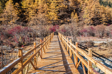 wooden walk in colorful autumn at Yading China.