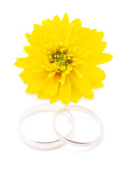 wedding rings and flowers aster on a white background