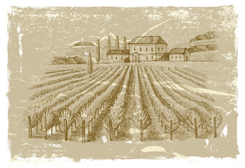 hand drawn wineyard