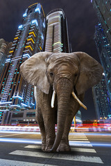 A metropolitan jungle with elephant walking on the road
