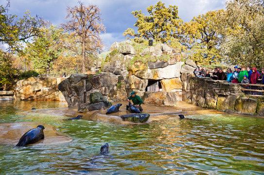 Fur seals feeding show at a Zoo