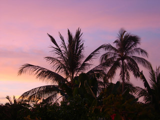 Palms and sun, tropical sunset
