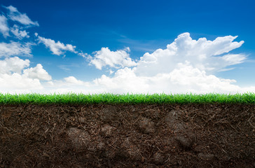 Soil and grass in blue sky Wall mural