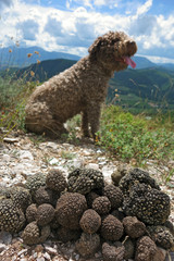 truffles and dog