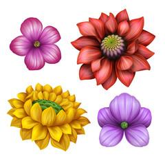 flower illustration, floral clip-art isolated on white