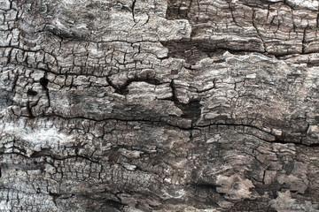 Tree bark texture, close-up