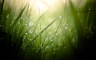 damp morning grass