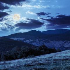 trees near valley in mountains  on hillside in moon light