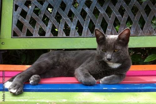 """banco de jardim vetor:gato cinzento no banco de jardim"""" Stock photo and royalty-free images"""
